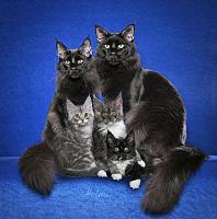 Нажмите на изображение для увеличения.  Название:0cats.JPG Просмотров:619 Размер:67.8 Кб ID:175424