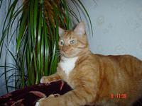 Нажмите на изображение для увеличения.  Название:Tima-Tiger in the Jungle.JPG Просмотров:543 Размер:159.1 Кб ID:123914