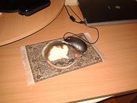 Нажмите на изображение для увеличения.  Название:Коврик для крыски-1.jpg Просмотров:333 Размер:1.58 Мб ID:155284