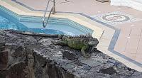 Нажмите на изображение для увеличения.  Название:iguana2.jpg Просмотров:24 Размер:187.4 Кб ID:325309