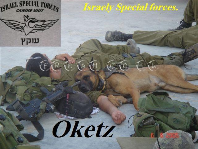 tzahal_oketz_dog_slip_modified