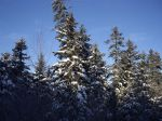 forest_in_snow.jpg