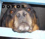 Doros-Ariordan1.jpg